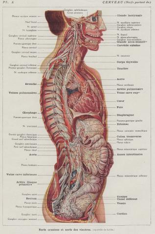 Anatomy Tongue | whereapy